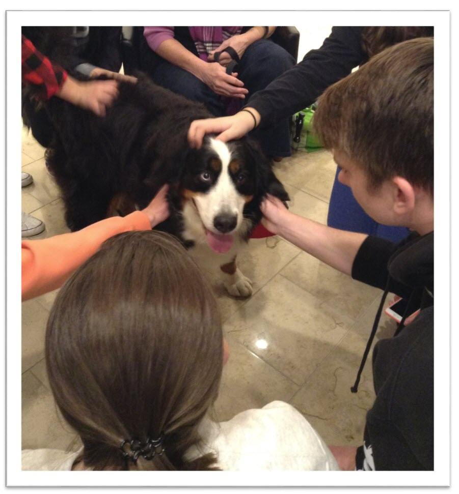 Athena the therapy dog